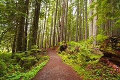 The Tall Trees at Mt Rainier stock photo