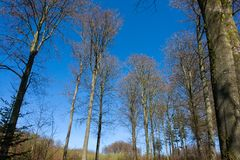 Tall trees nature forest background Royalty Free Stock Images