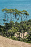 Tall trees on New Zealand coast Stock Photos