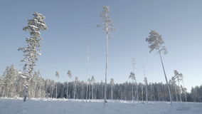 Tall trees with no trees in the snow. Thick snow covering the whole area in the winter season stock video footage