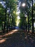 Sun shining through trees in a park. Tall trees in a park in Stockholm with shade and the morning sun shining through the leaves on a sunny day Royalty Free Stock Images