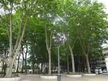 Tall trees park. City, lights, europe, spain, green, nature, out royalty free stock photo