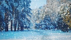 Tall trees and a path in the park with falling snow, blue color. Cinemagraph seamless loop animation motion gif render background stock footage