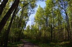 Tall trees reveal secrets. stock photos