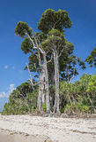 Tall trees at sea beach Stock Images