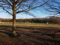 Tall trees with shadows and grass and soccer or football field stock photo