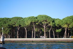 Tall trees. A small little island in Venice Italy with a group of tall trees right off the water Stock Photos