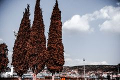 Tall trees in the sourounding of a football field royalty free stock photo