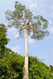 Tall trees. Under blue sky Royalty Free Stock Photo
