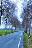 Tall trees in winter. Here along a country road in Westphalia, Germany Royalty Free Stock Photos