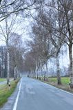 Tall trees in winter. Here along a country road in Westphalia, Germany Royalty Free Stock Image