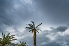 Tropical palmtree at dusk. Tall tropical palmtree with the dark stormy evening sky in the background royalty free stock photography