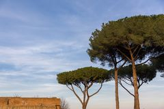 Tall umbrella pine trees in mediterranean scene with roof of red. Three tall umbrella pine trees in mediterranean scene in italy with roof of red brick building Stock Photos