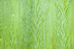 Tall weeds in wildflower garden Royalty Free Stock Photography