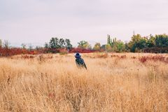 Woman walks in the field at autumn stock images