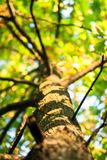 Tall young oak tree with lush crown branched trunk. Vibrant colors of early autumn and tender sunlight evokes admiration and inspire for the best, filling the Stock Images