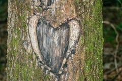 Talla de corazón del árbol Fotografía de archivo
