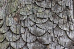 Talla de madera de la escala fotos de archivo libres de regalías