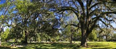 Tallahassee miasta Stary cmentarz jest starym miejsce pochówku w mieście, Tallagasse obraz stock