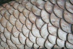 Tallando la escala de madera de la cola de la sirena, texturice el fondo de madera, hecho a mano fotografía de archivo libre de regalías