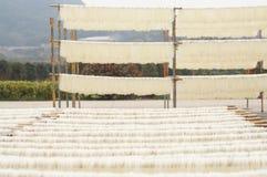 Tallarines de cristal chinos de sequía Foto de archivo libre de regalías