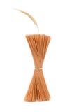 Tallarines del trigo Foto de archivo libre de regalías