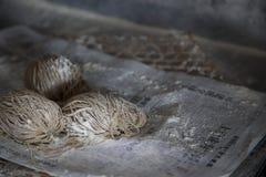 Tallarines hechos a mano frescos fotografía de archivo libre de regalías