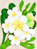 Tallas de la flor del Frangipani Fotografía de archivo