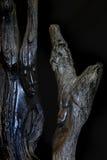 Tallas de madera Fotografía de archivo