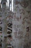 Tallas del árbol Foto de archivo libre de regalías