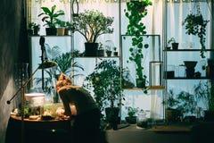 Taller de un jardinero casero imagenes de archivo