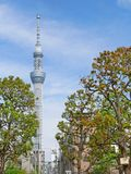 Tokyo Skytree & actual trees. Tallest structure in Japan, Tokyo Skytree seen from afar in the suburbs of Asakusa through trees Stock Image