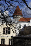 Tallin centrum miasta Fotografia Stock