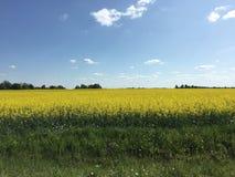 Tallin Estônia Foto de Stock Royalty Free
