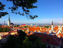 Tallinn, the capital of Estonia. The view from the old upper city to the red roofs of an old town. Stock Photos