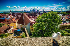 Tallinn, Estonia: aerial top view of the old town Stock Images