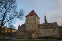 Tallinn, Estonia: Kiek in de Kok Museum e tunnel del bastione in muro di cinta difensivo medievale di Tallinn Luogo del patrimoni fotografie stock