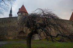 Tallinn, Estonia: Kiek in de Kok Museum e tunnel del bastione in muro di cinta difensivo medievale di Tallinn Luogo del patrimoni fotografia stock libera da diritti