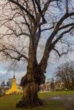 Tallinn, Estonia: St John kościół Tallinn w wolność kwadracie w starym miasteczku obraz royalty free