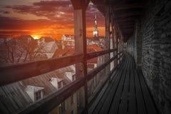 Tallinn - huvudstaden av Estland Royaltyfri Bild
