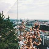 Tallinn stad, Estland - lopp i det Europa begreppet arkivbild