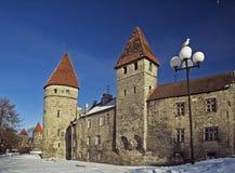 Tallinn in the winter Royalty Free Stock Photo