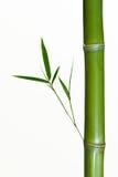 Tallo de bambú Imagen de archivo libre de regalías