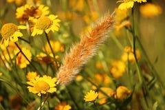 Tallo del trigo en un campo de flores Imagen de archivo