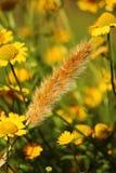 Tallo del trigo en un campo de flores Fotografía de archivo libre de regalías