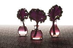 Tallos asiáticos de la col rizada en floreros foto de archivo