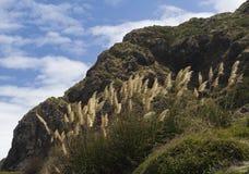 tallos de la hierba en una costa Fotografía de archivo libre de regalías