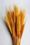 Tallos del trigo Imagenes de archivo