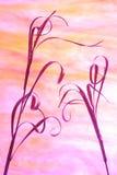 Tallos en colores pastel de la hierba secada Imagenes de archivo