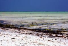 Tallos y alga marina imágenes de archivo libres de regalías
